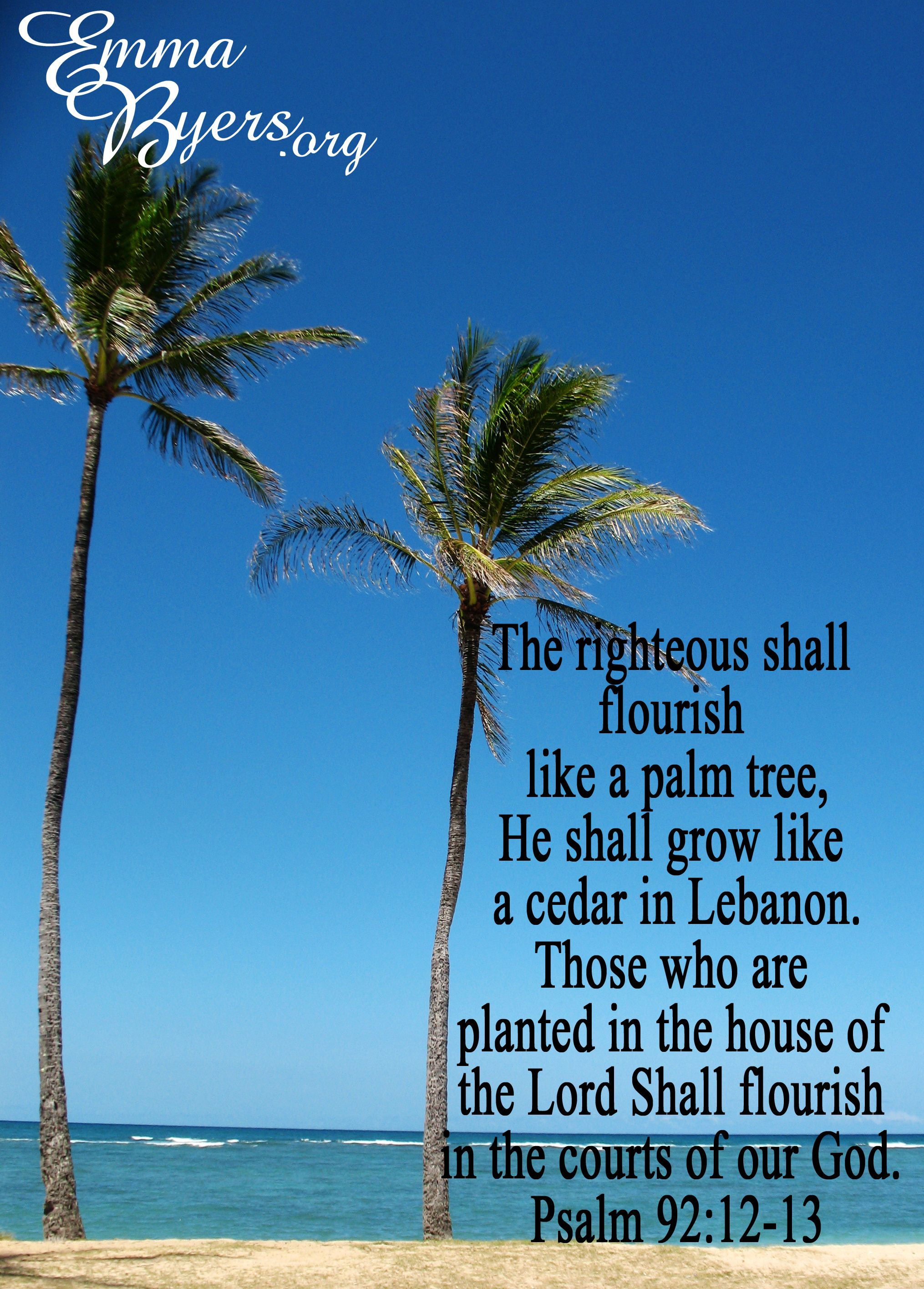 Psalm 9212 13 Hawaii Palm Trees Bible Verse Planted In The House