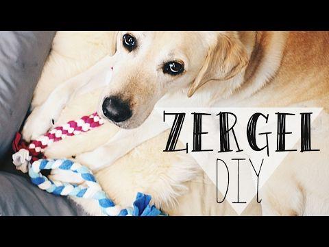 Anleitung Hundespielzeug Selber Machen Hunde Diy Zergel In 10