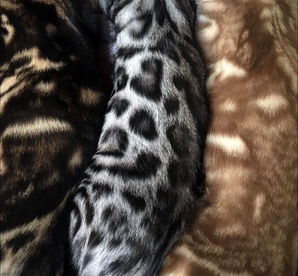 A Visual Guide to Bengal Cat Colors & Patterns Cat