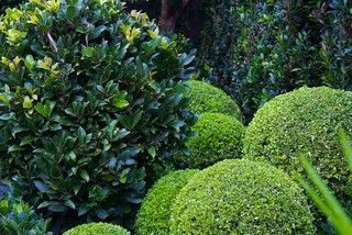 Green-Only Gardens Draw the Eye and Soothe the Spirit #beetanlegen