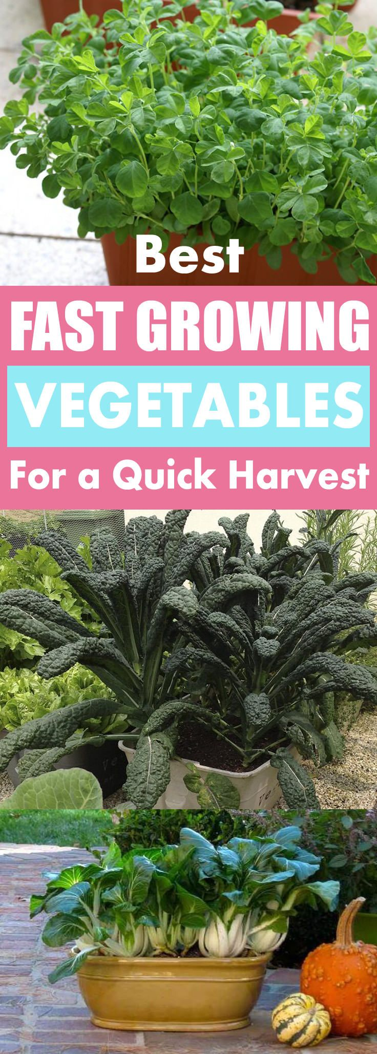 13 Fast Growing Vegetables For Containers Fast Growing 640 x 480