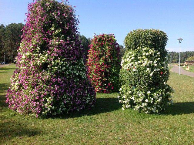 Kompozycje Kwiatowe Plants