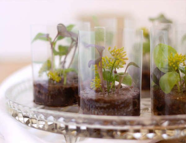 Chocolate Terrariums