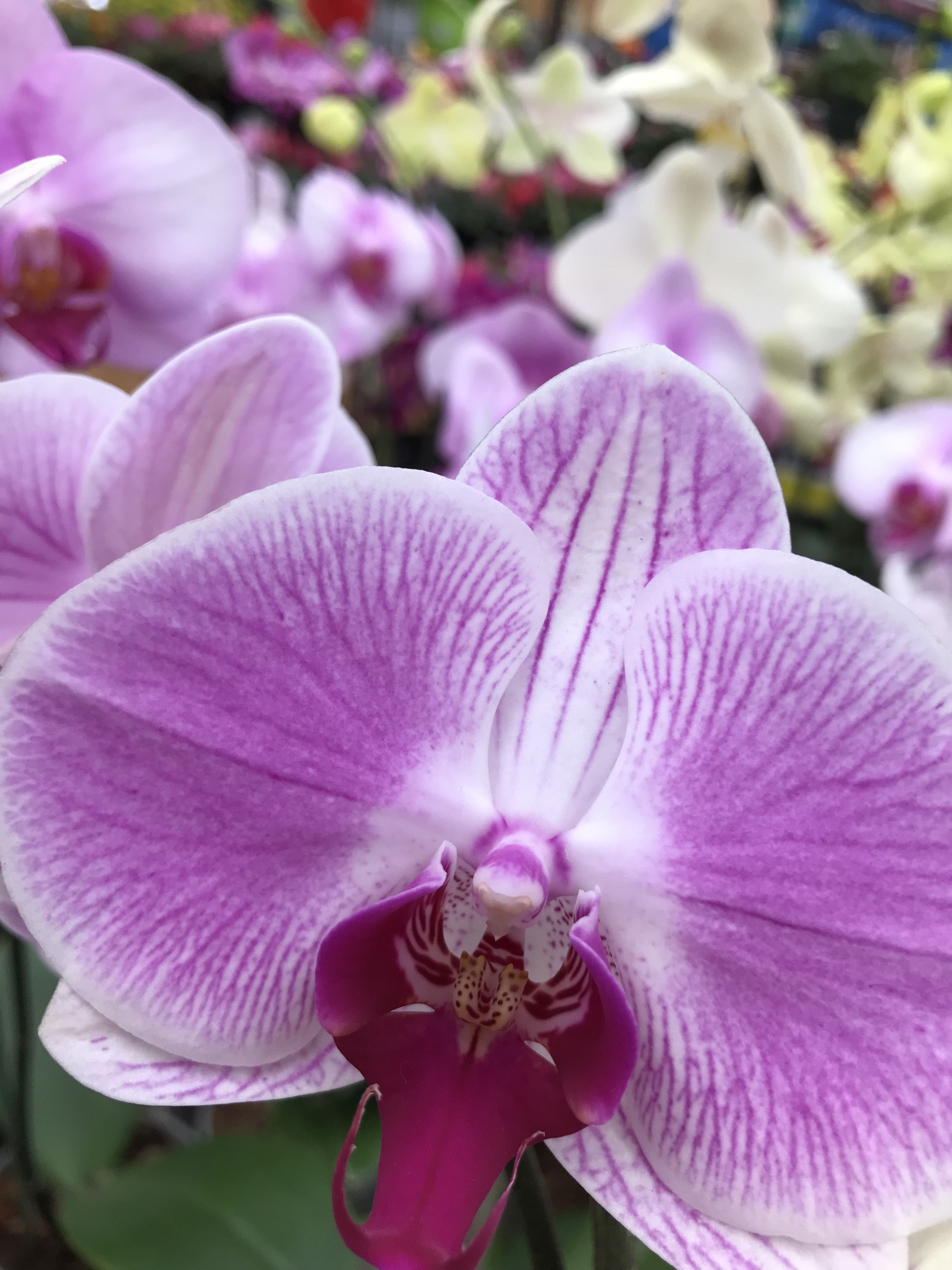 Some of jehovahus beautiful creations here in quito orchids are