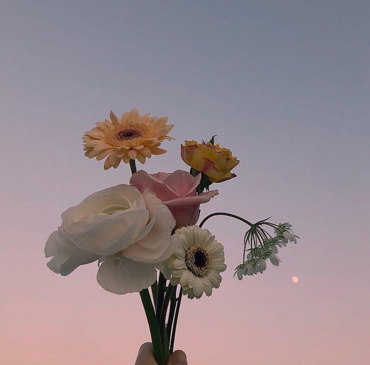 flower aesthetic nature