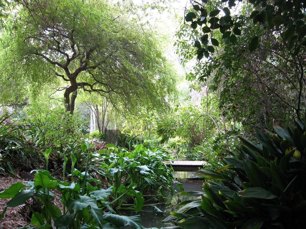Wander The Mildred E Mathias Botanical Garden At Ucla Morning