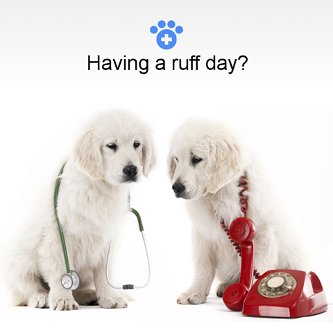 No Pet Insurance Is Required To Talk To A Vet With The Kuddly App