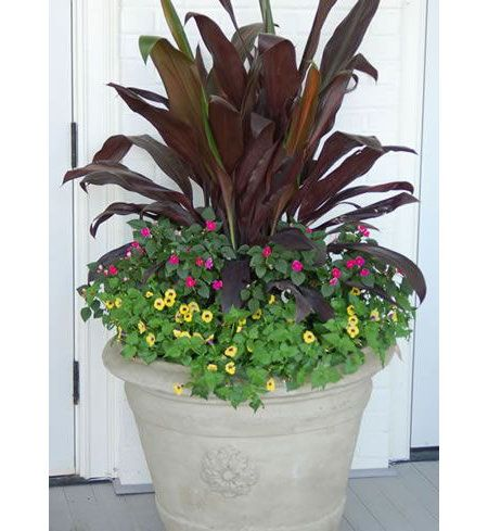 Create a beautiful shade container garden using three strong summer plants including Hawaiian ti wishbone flowers and impatients