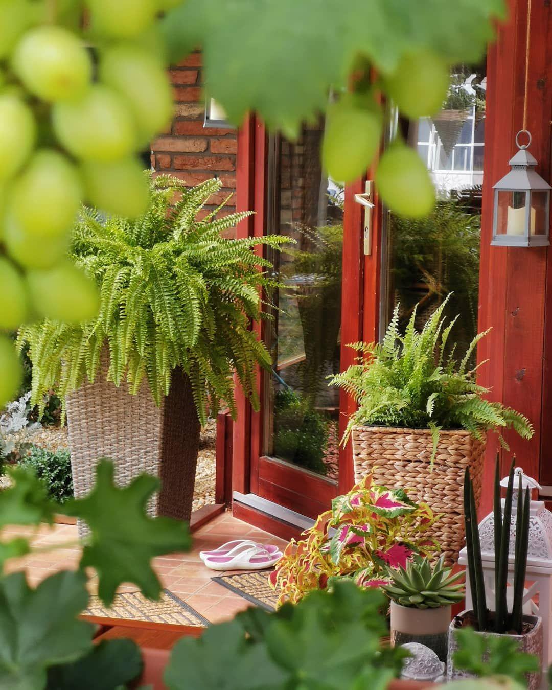 My Lovely Small Garden Small garden, Biophilic