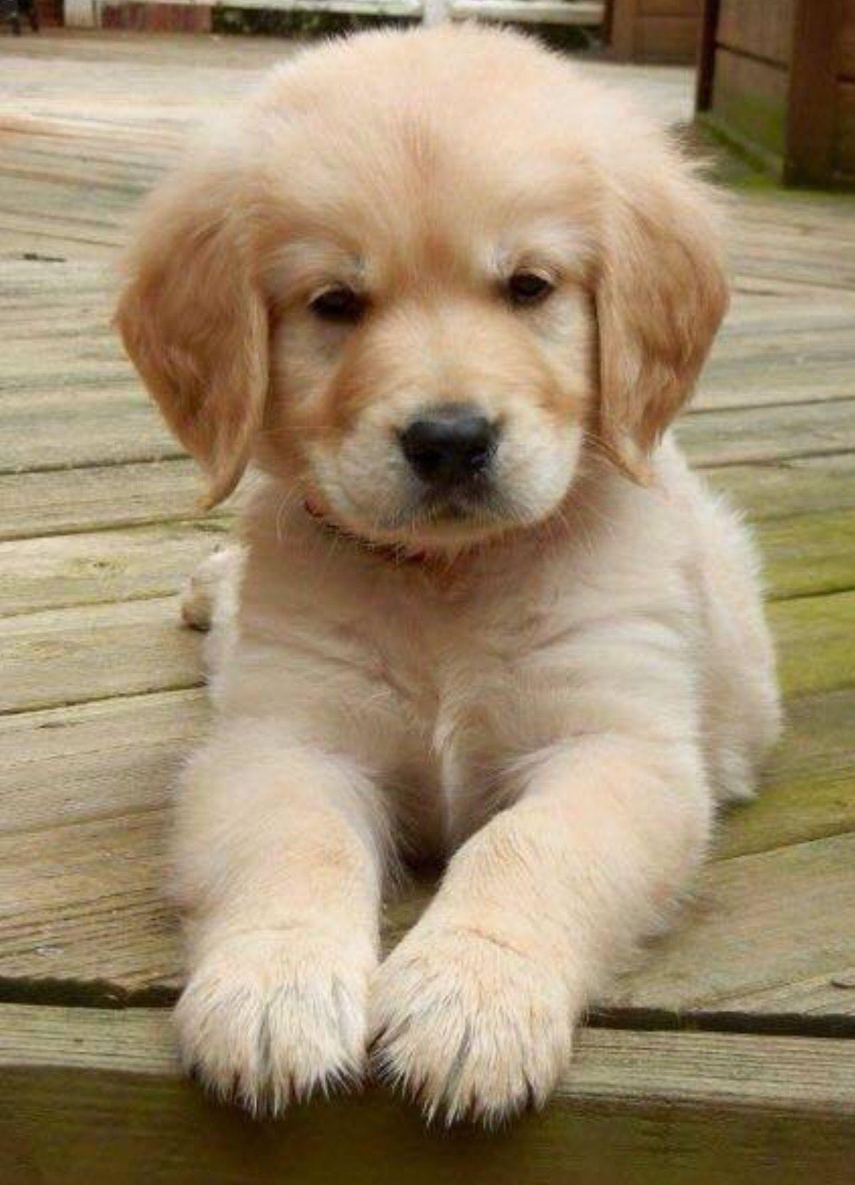 Cute Puppy Dogpetpuppyideas Lovely Dog Pet Ideas