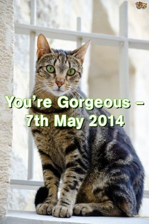 Michelle Ogden Tells About You're Gorgeous – 7th May 2014   #catbreeds  #kitten  #catoftheday  #adoptdontshop  #Adult  #Choose  #catcondo  #Patterns