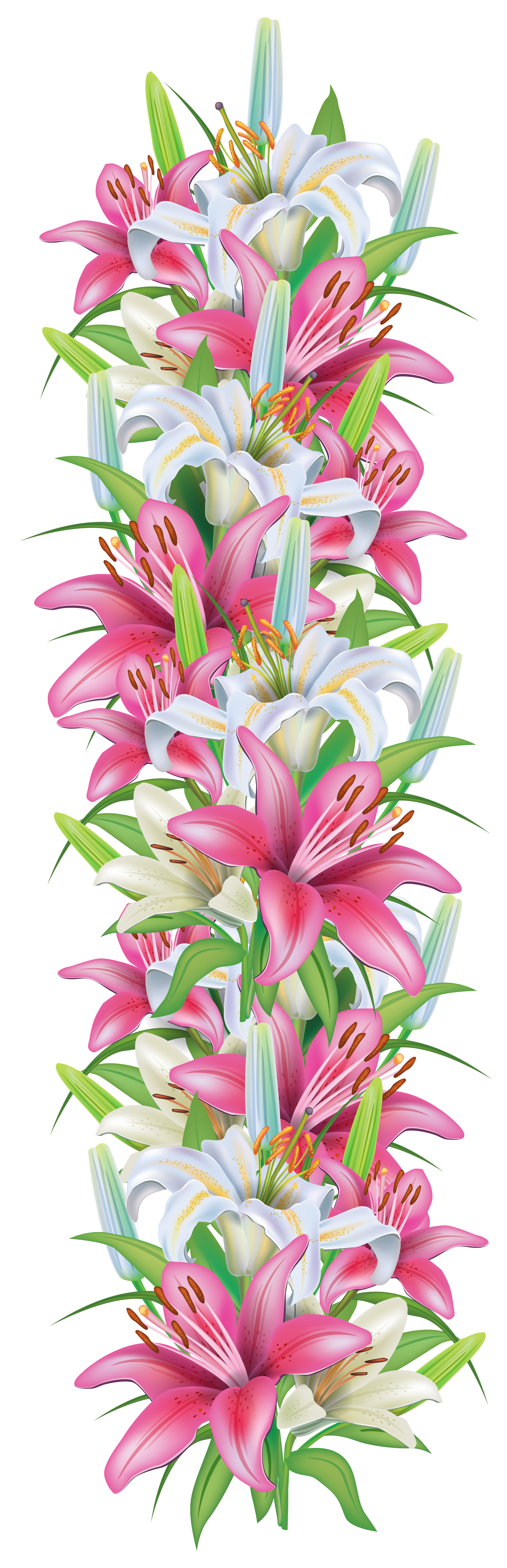 Pink lily flower transparent image the cliparts - Pink And White Lilies Decoration Border Png Clipart Image