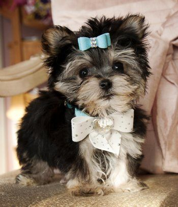 I will have one of these eventually!!! Cutest dog ever! :)