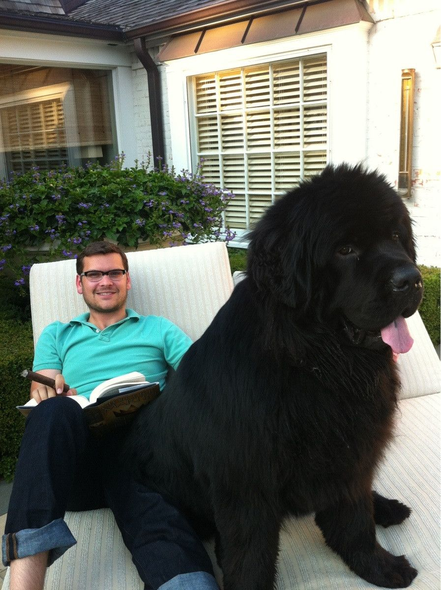 150 Pounds Later And He S Still A Lap Dog Huge Dogs Giant Dogs