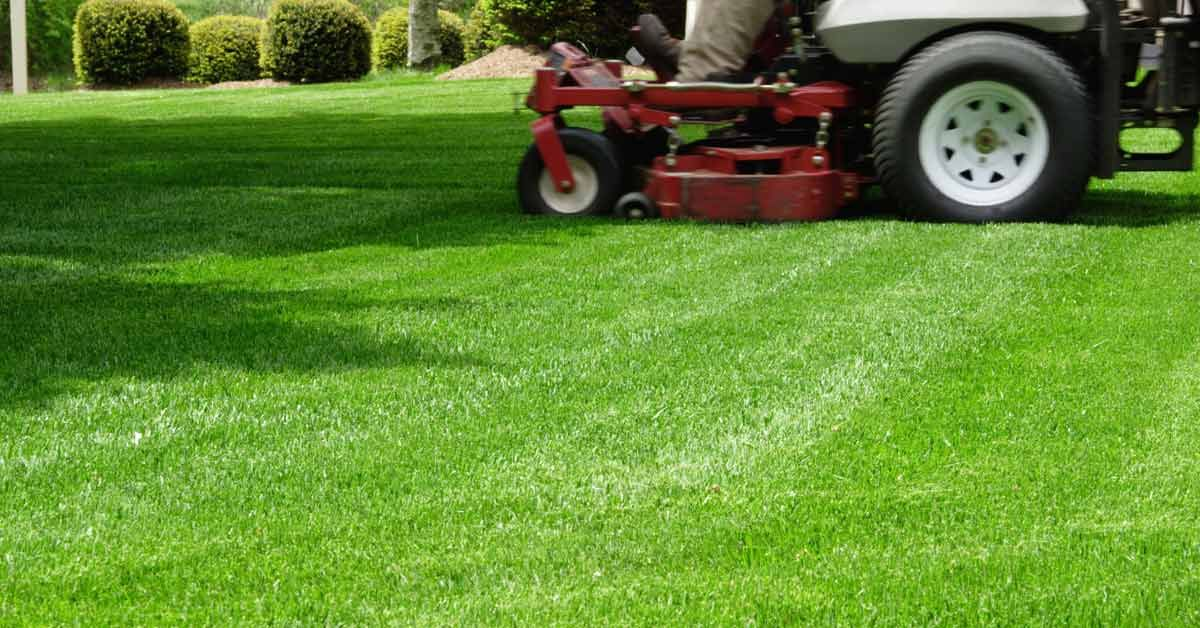 Professional Grass Advice for the Perfect Lawn Planting