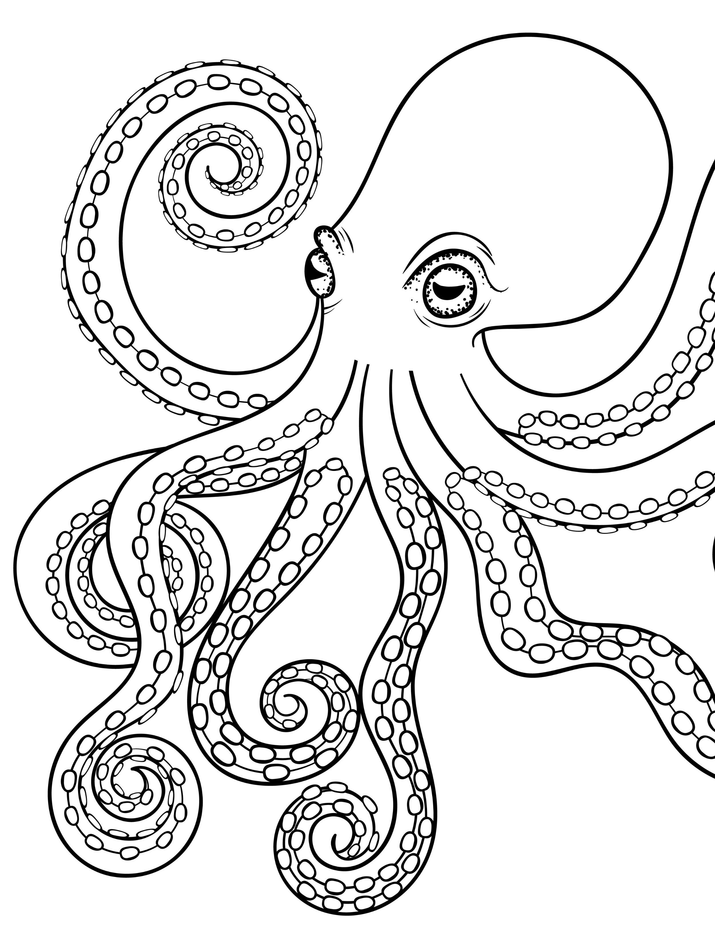 octopus adult coloring page for adults | Sea/Ocean | Pinterest | Dibujo