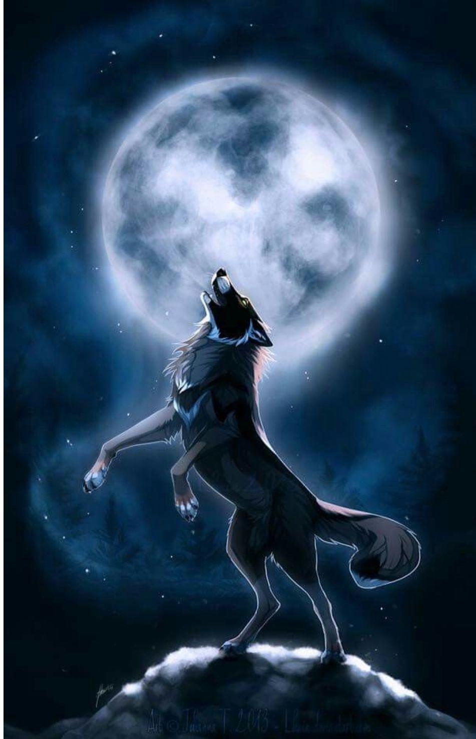 Anime Background Wallpaper Free Gambar Hewan Serigala Melolong Binatang Buas