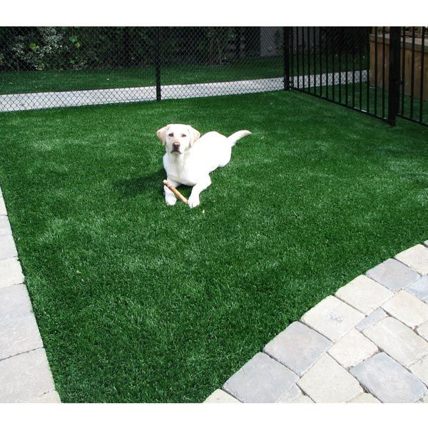 Rug Dog Won T Chew: Office Won't Be Complete Without Artificial Dog Grass For
