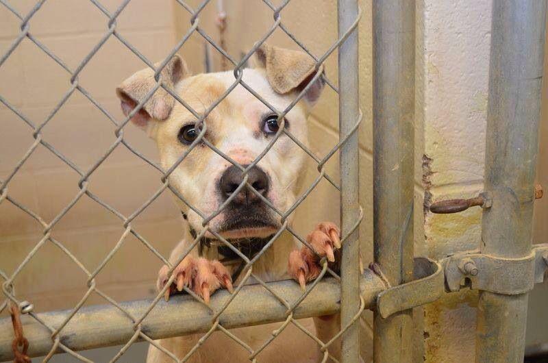 15++ Carrollton ga animal shelter ideas in 2021