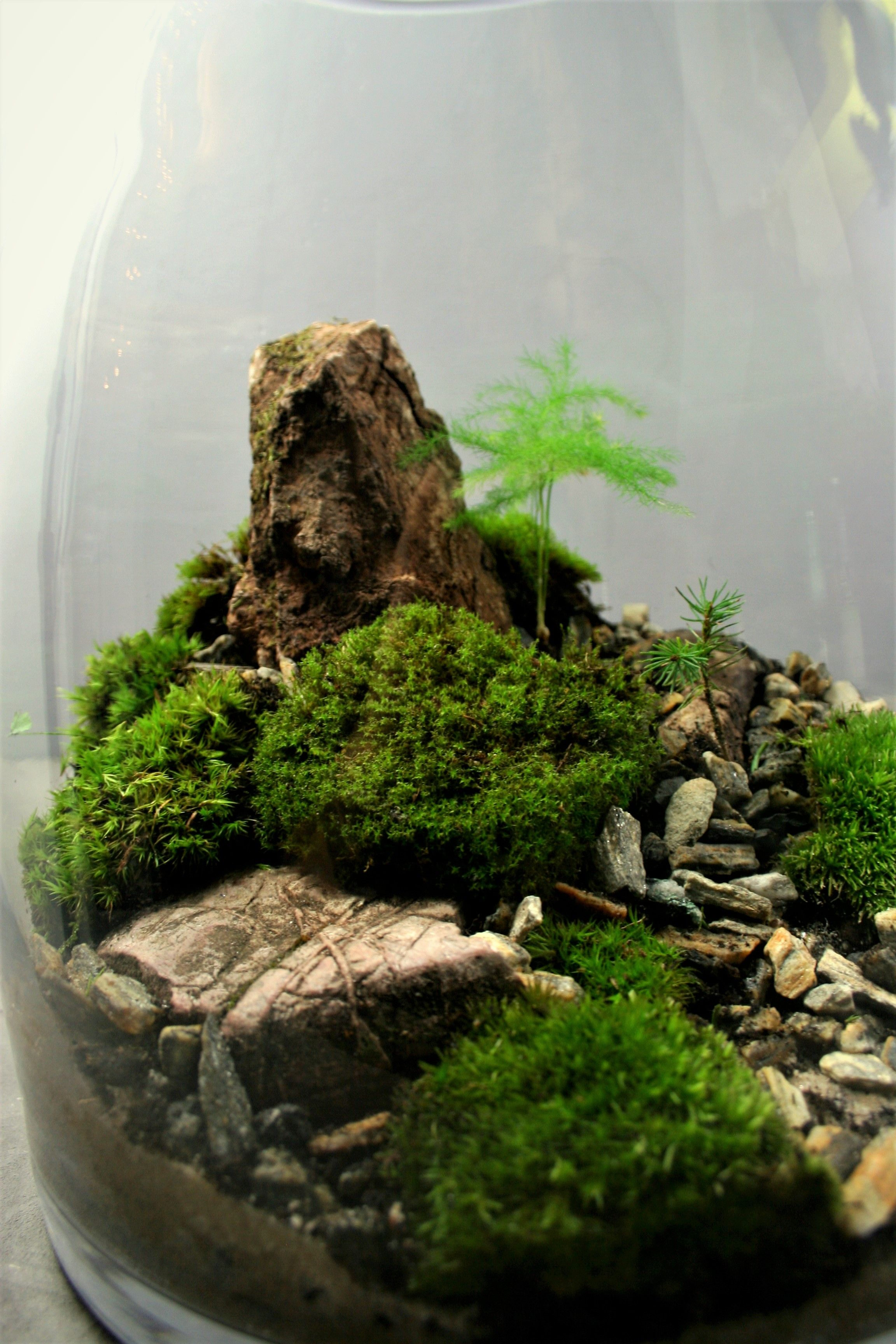 Fascinating Bonsai Terrarium For Miniature Landscaping In The Jars