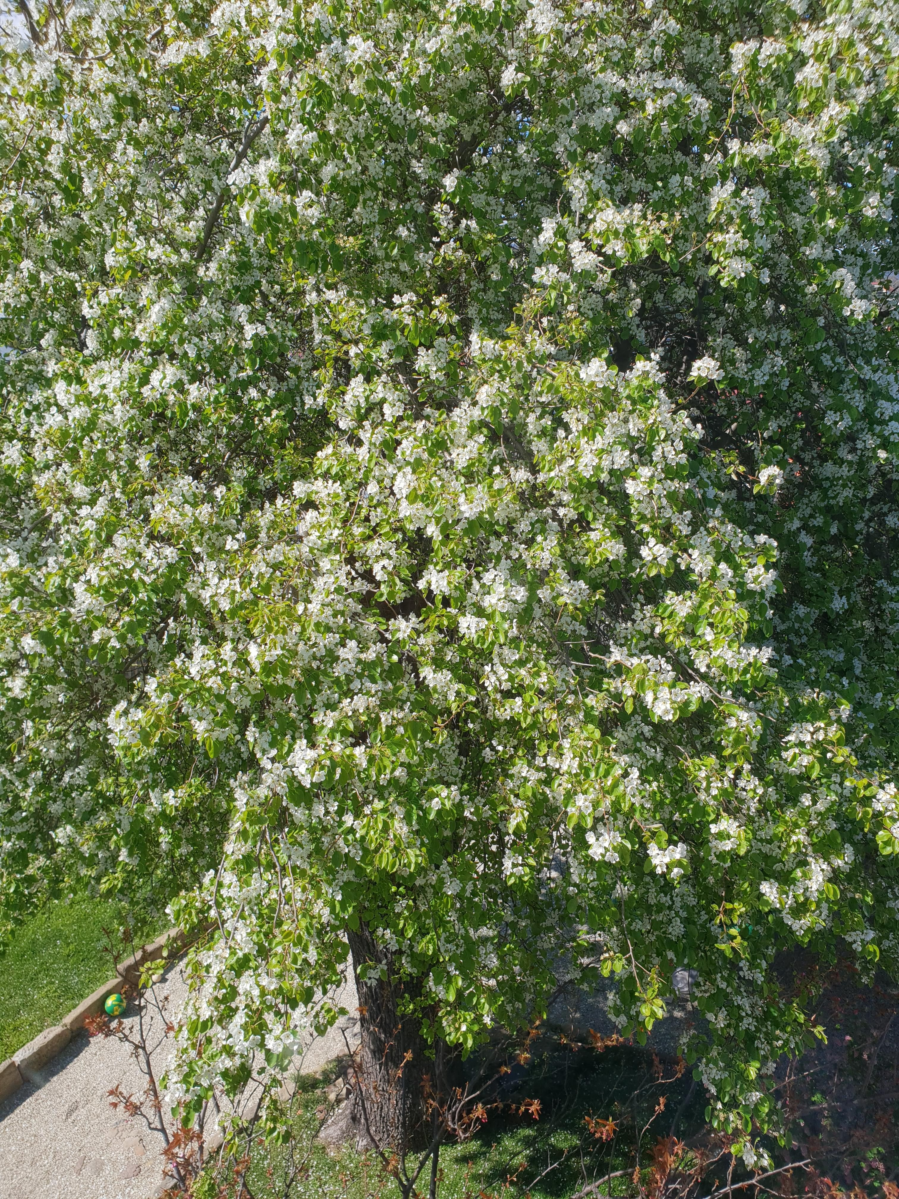 Garden trees names  Pin by Punny Garden on Gardening  Pinterest  Garden Home flowers