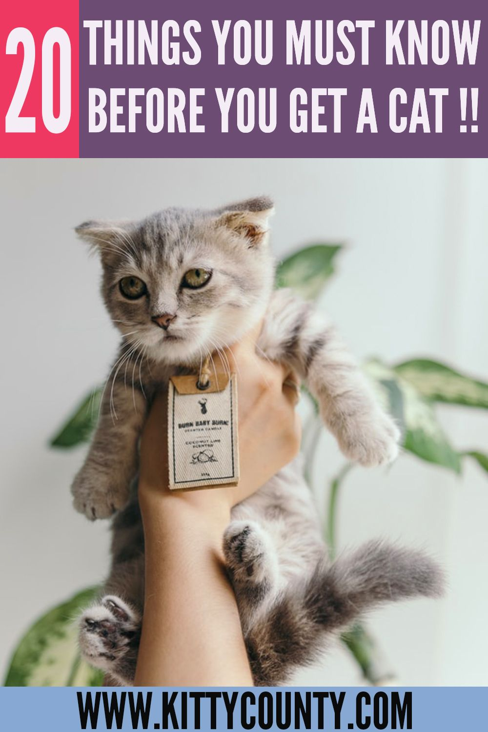 20 Tips For Bringing A New Kitten Home Kitty County In 2020 First Time Cat Owner Cats Getting A Kitten