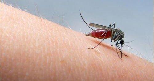 De bons moyens de soulager les piqûres de moustiques – #bien #de #la #moustique …   – Broderie et Couture
