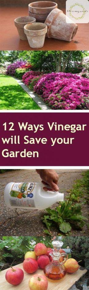 12 Ways Vinegar Will Save Your Garden Vinegar To Save Your Garden Pinterest Gardening