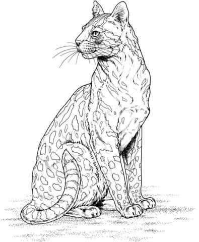 Cheetah 21 Coloring Page From Cheetah Category Select From 24104 Printable Crafts Of Cartoons Natur Cheetah Drawing Animal Coloring Pages Cute Coloring Pages