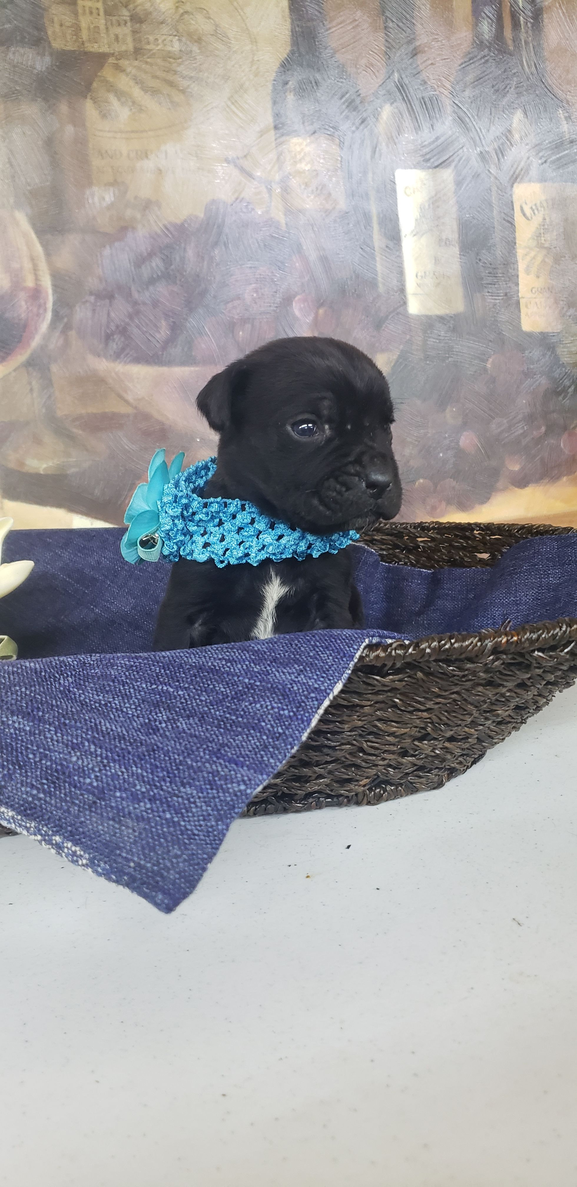 Boone in 2020 with images puppies puppy adoption