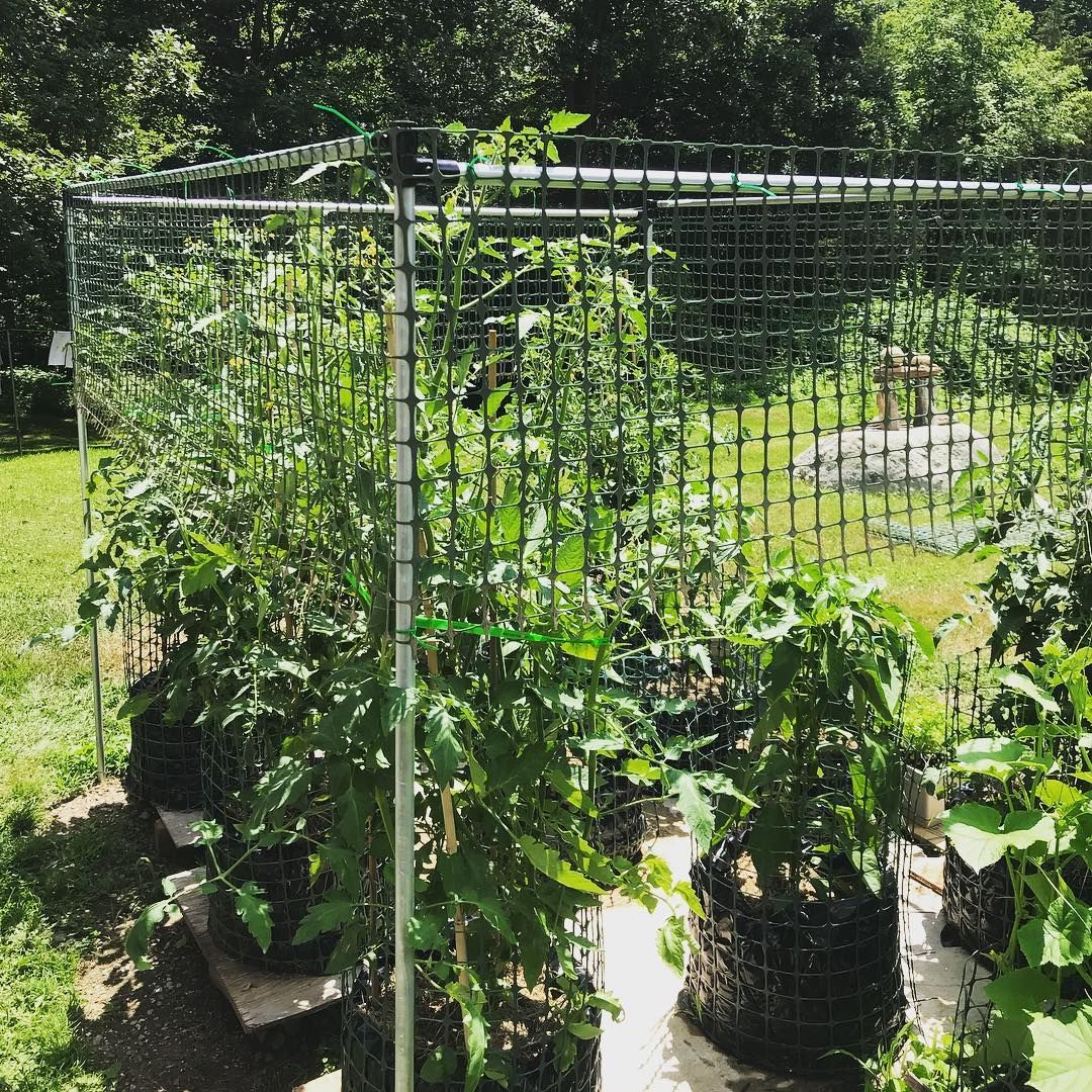 Give your tomato plants something to climb on! 8 #MakerPipe