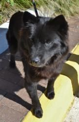 Adopt Princess Breena On Animals Adoption Animal Rescue