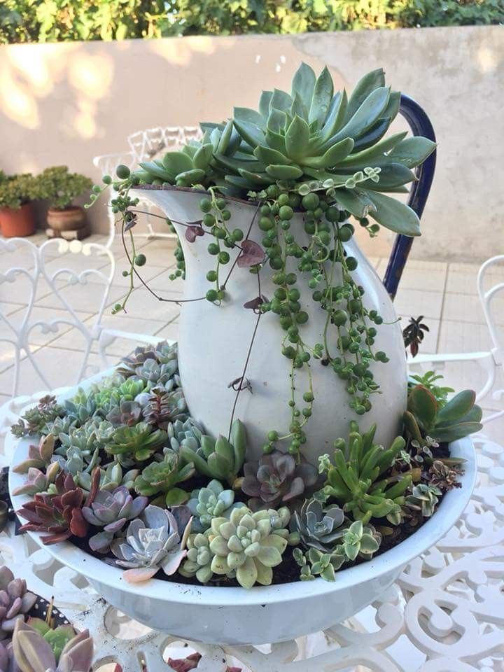 Succulent display  Petra Sigmund  #display #Petra #Sigmund #Succulent #steingartenideen
