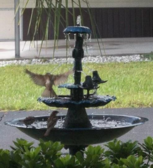 Birds not only love to splash around in the water but they need it to survive.  Do you supply a source of water for your feathered friends?  Thanks to Cynthia Stevens for this great photo!