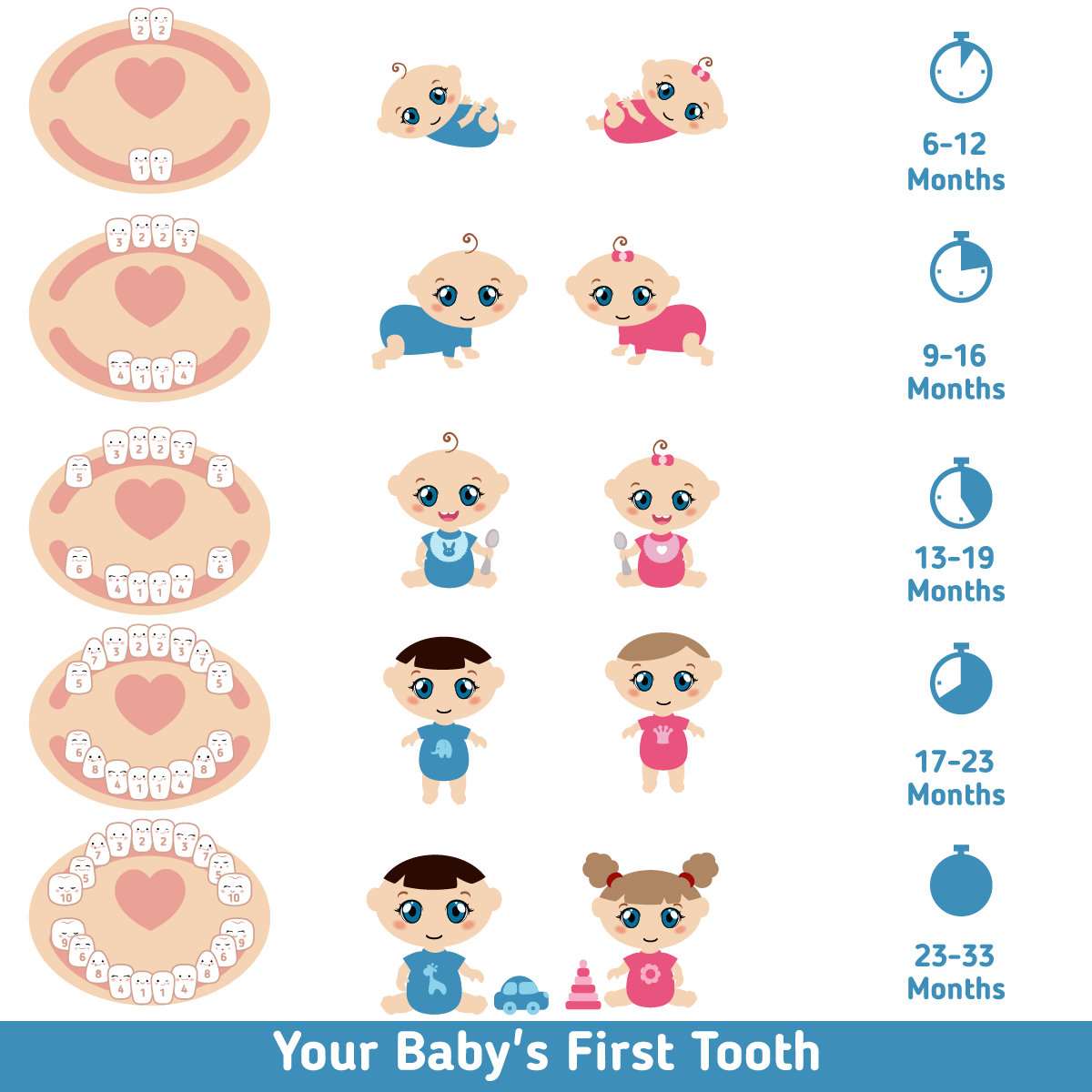 Baby Teething Chart  Baba E    Teething Chart Babies