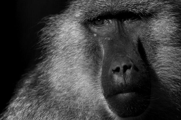 Zoo Portraits - Boza Ivanovic