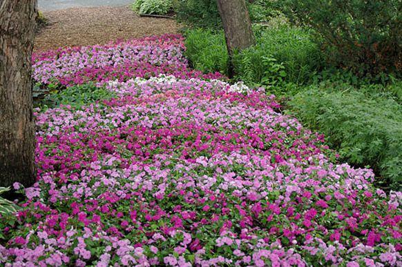 Les 10 plus beaux jardins du Québec | Beaux jardins, Le quebec et Québec