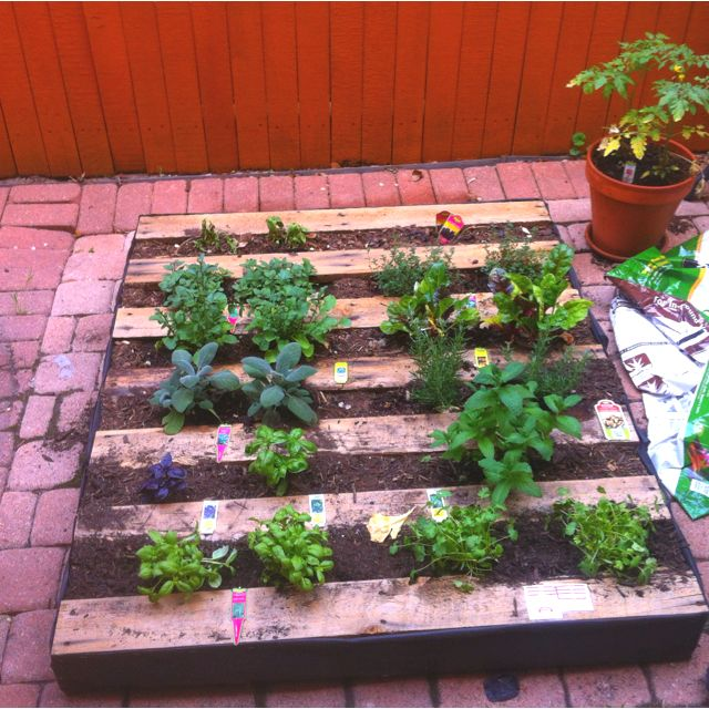 """Pallet herb garden. Checked this off my """"to-do"""" list."""