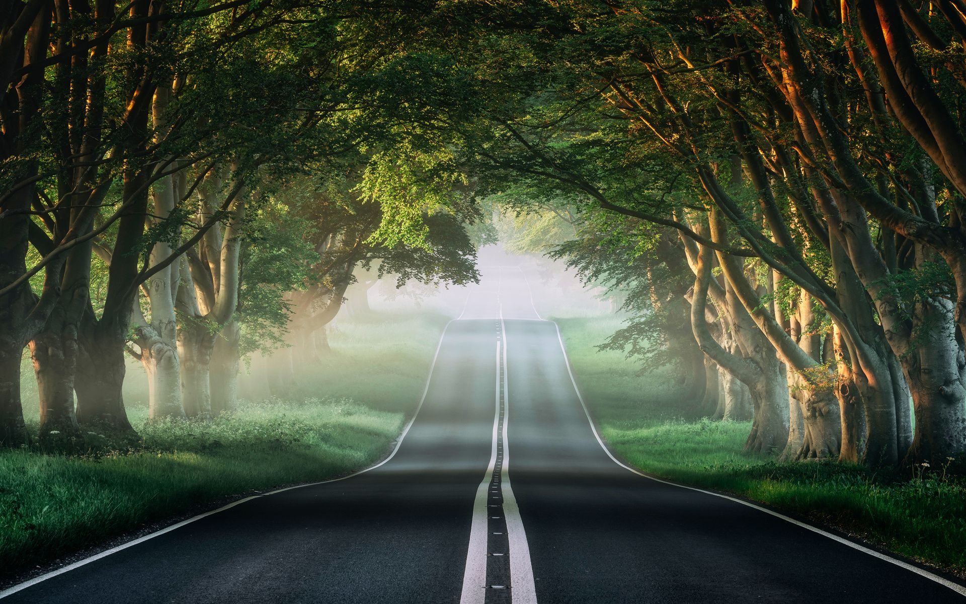 1920x1200 Misty forest, highway, road, trees wallpaper