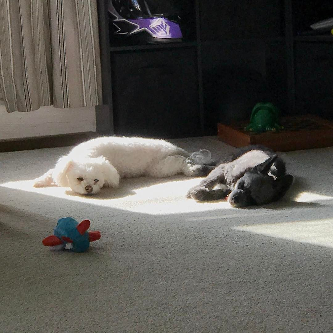 Sometimes At The End Of The Week You Just Need To Find A Sun Spot