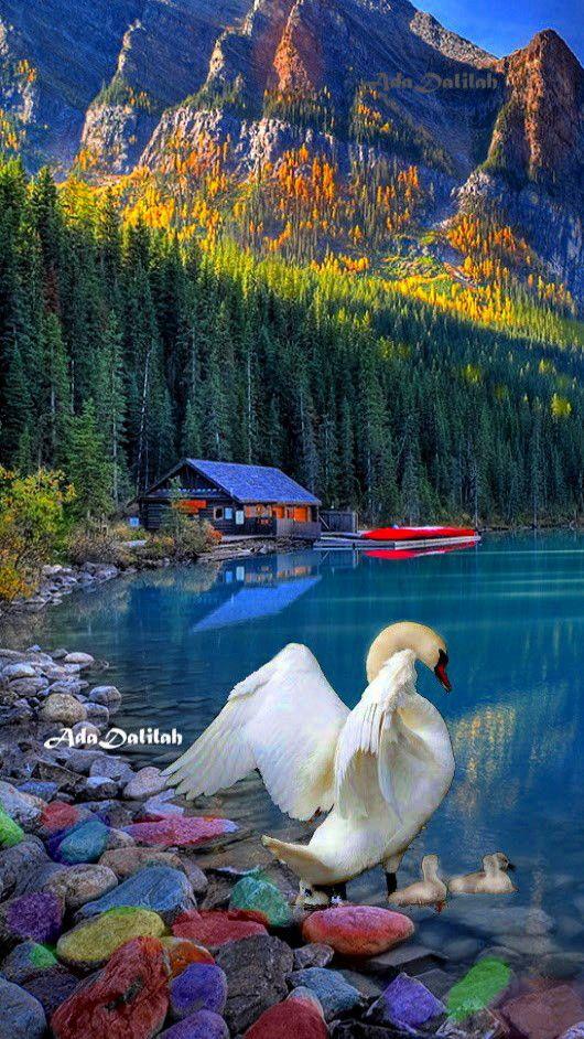 Pin By Ada Dalilah On Swans Art Creative Montage Beautiful Nature What A Beautiful World Amazing Nature