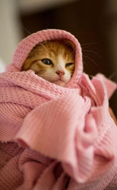 خلفيات قطط كيوت 2019 صور قطط للبنات رائعة 2020 فوتوجرافر Cats Animals Kittens