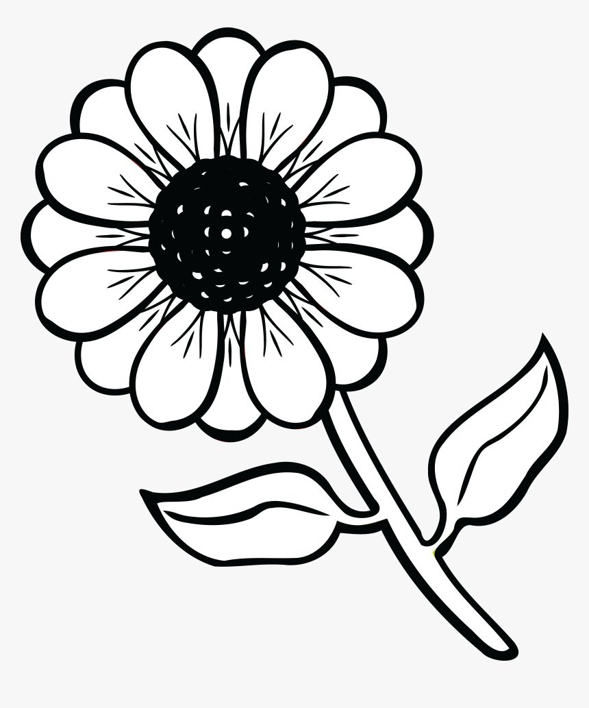 Black And White Flowers Clipart Images Black And White Flowers Flower Drawing Free Clip Art