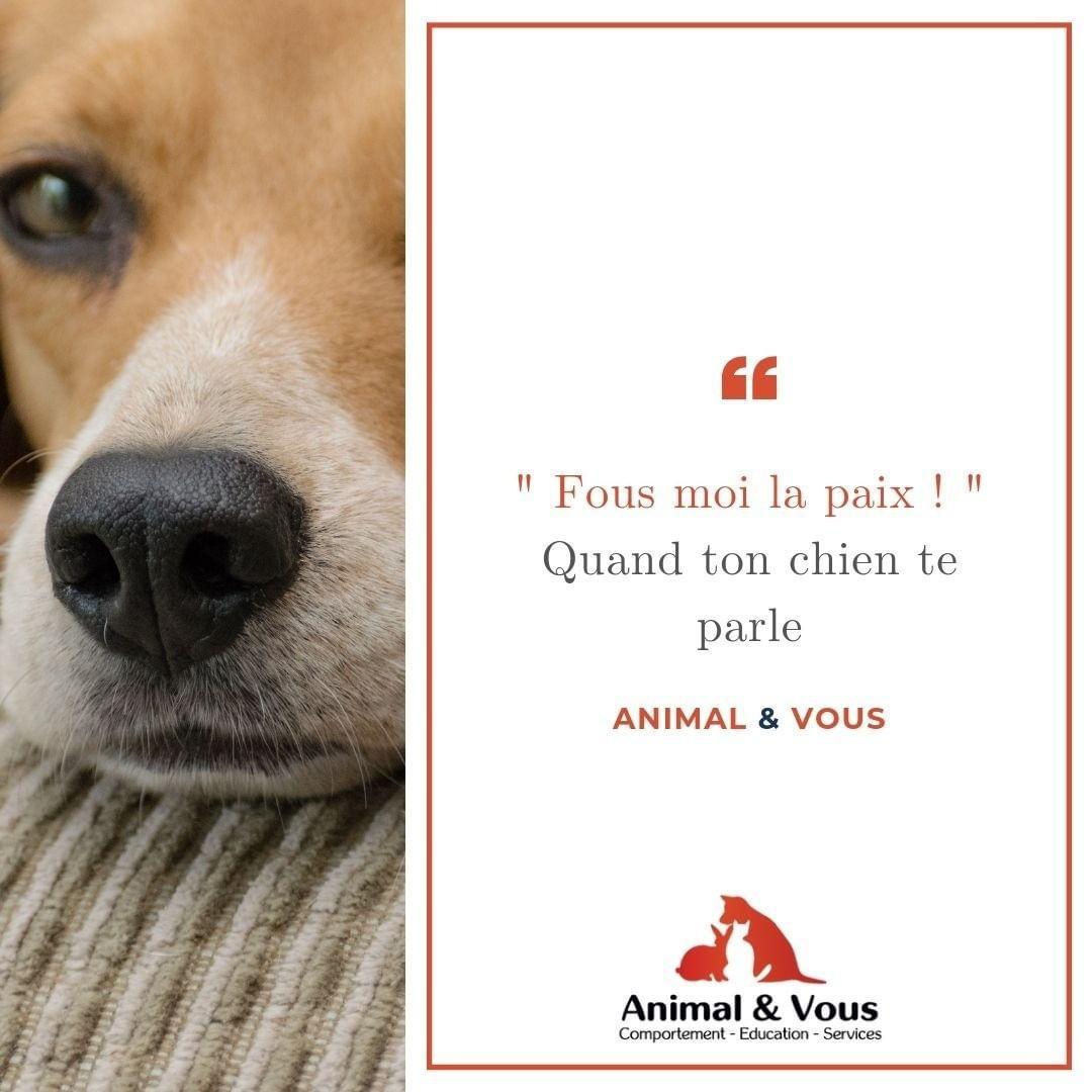 La Communication Canine Est Simple Quand On Sait La Decoder Un Des Moyens De Communication Du Chien Est Lenvoie De Signaux Dapaisements Ils Peuv Animals