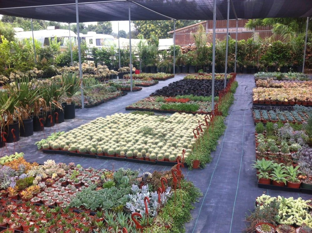Jeny Sod Services Nursery 17150 Sw 177th Ave Miami Fl 33187 Phone Number 305 256 1150 Nurseries Gardening