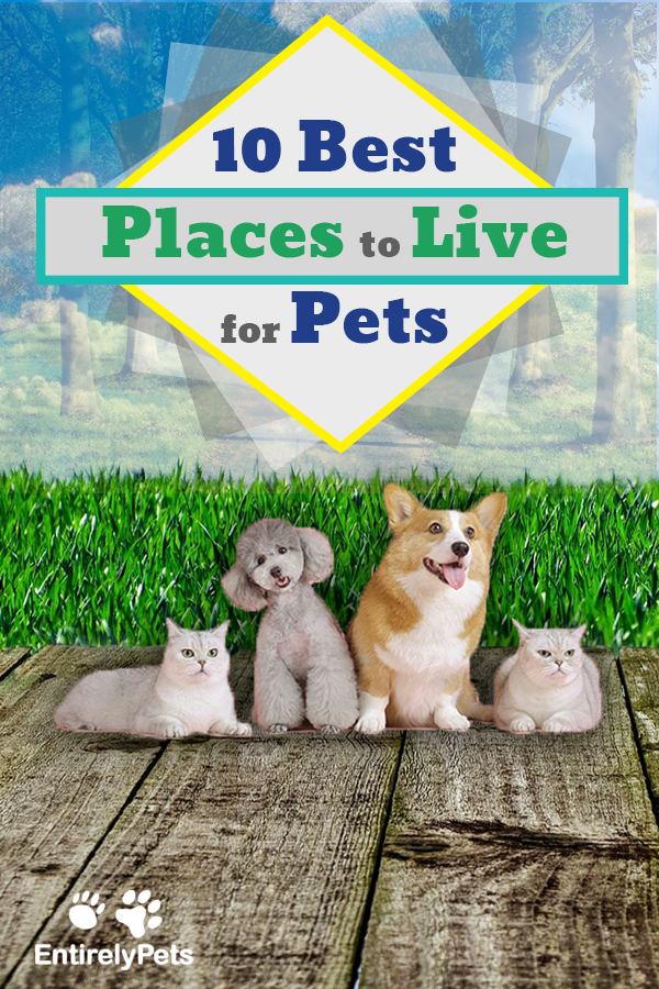 10 Best Places For Pets To Live Pets Best Places To Live Pet Home
