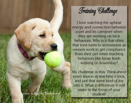 Dog Training Challenge To Use Positive Reinforcement With Images