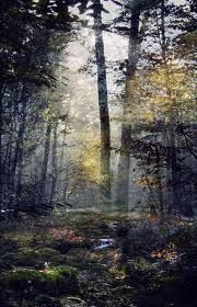 the forest.. Oh please let me go there!!