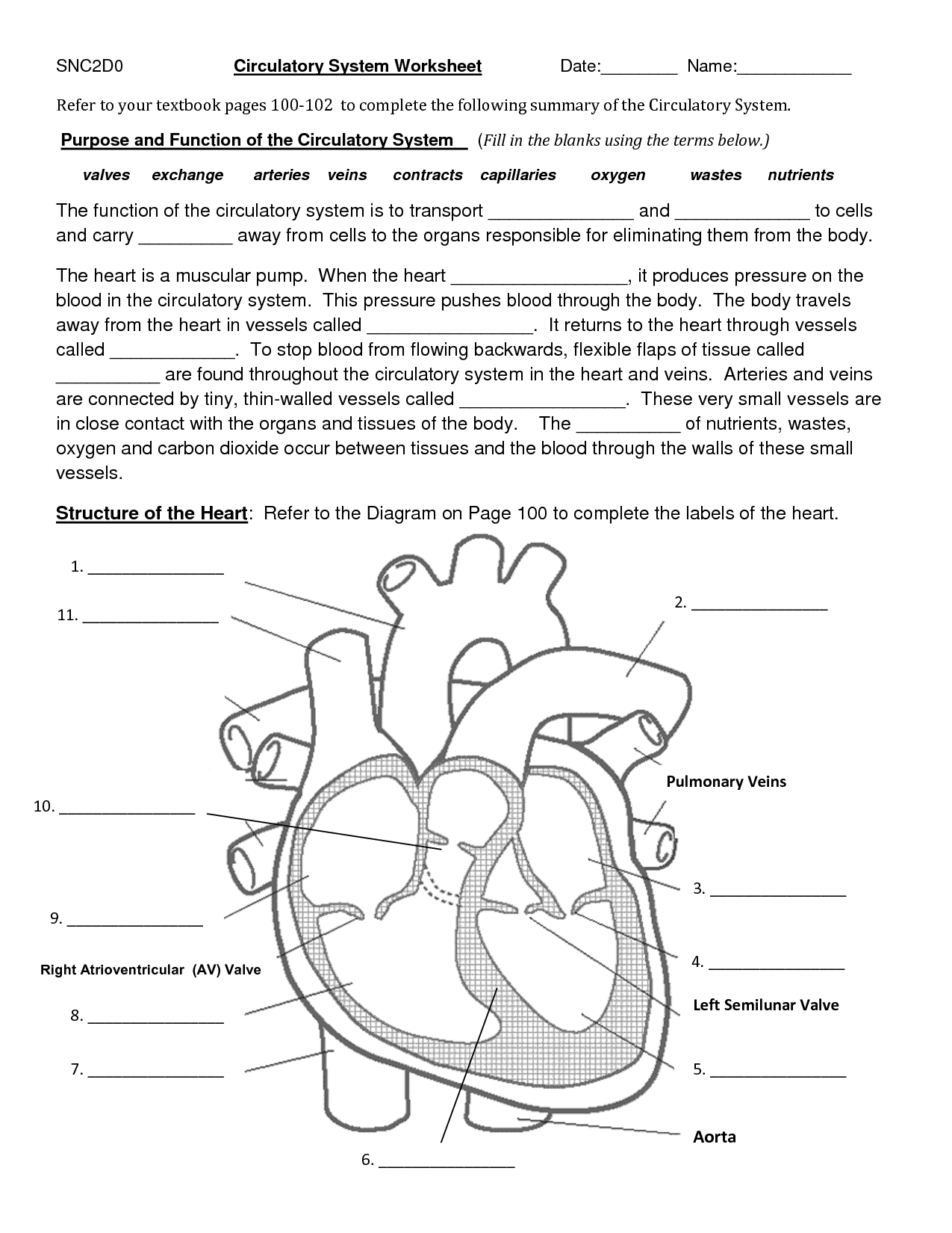 circulatory system worksheet Circulatory system