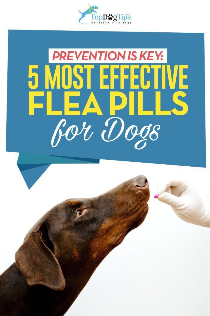 Top 6 Best Flea Pills For Dogs Flea Treatment Flea Medicine For Dogs Dog Pills
